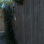 Ivy destroying a fence